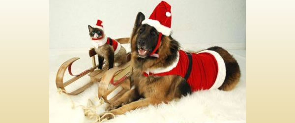 Santa Dog and Kitty Claws
