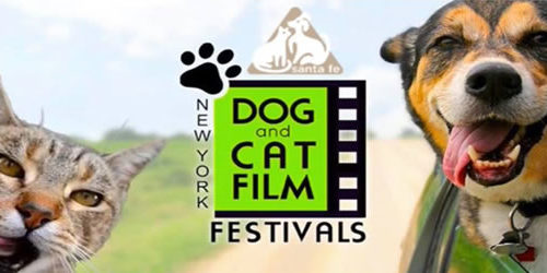 NY Cat Film Festival RETURNS