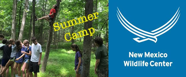 Wildlife Explores Summer Camp