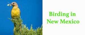 Birding In New Mexico @ New Mexico Wildlife Center | Española | New Mexico | United States