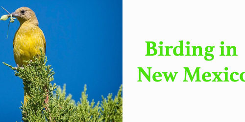 Birding at New Mexico Wildlife Center