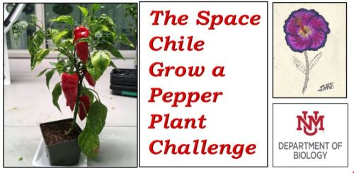 The Space Chile Grow a Pepper Plant Challenge