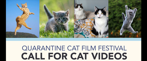 QUARANTINE CAT FILM FESTIVAL
