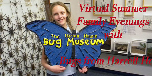 Bugs from Harrell House