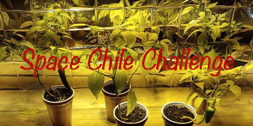 Online challenge brings New Mexico chile to world